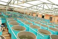 Aquaculture Ozone Generator by Aeolus
