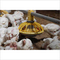 Poultry Automatic Feeding System