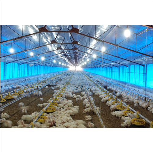 Poultry Roof Insulation