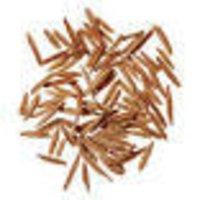 Holarrhona antidysentrica Dry Extract
