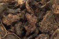 Nardostachys jatamansi Dry Extract