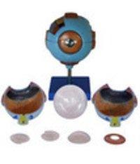 Giant Eye Model(XC-316)