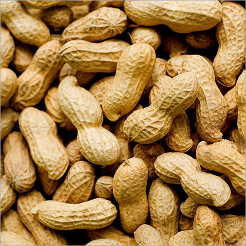 Raw Groundnut