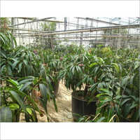 Plants Greenhouse