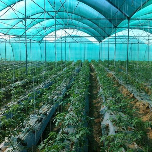 Greenhouse And Polyhouse Film