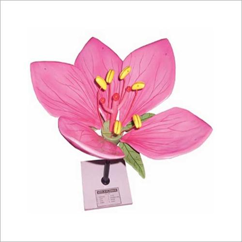 Biology Flower Model