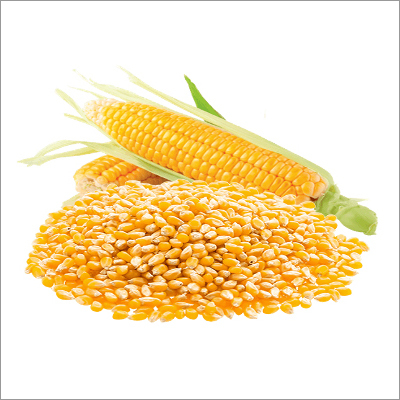 White & Yellow Maize