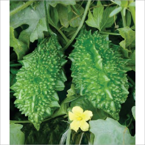 Tarana F1 Hybrid Bitter Gourd Seeds