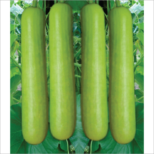 Komal F1 Hybrid Bottle Gourd Seeds
