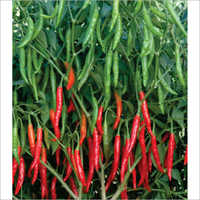 Harita F1 Hybrid Chilli Seeds