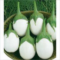 Tulsi F1 Hybrid Egg Plant Seeds