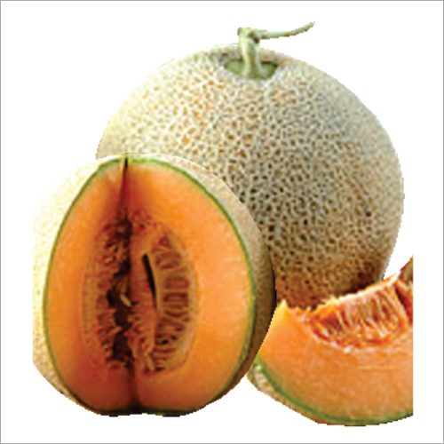 Musk Melon Seed