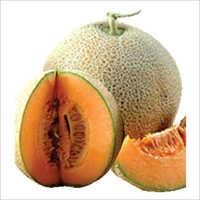 Angad F1 Hybrid Musk Melon Seeds