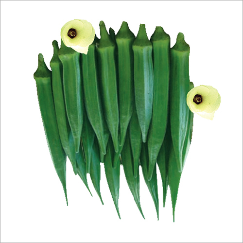 bhindi seed
