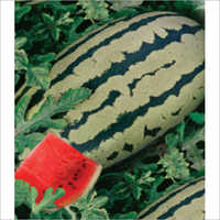 Chaman F1 Hybrid Water Melon Seeds