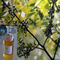 Eucalyptus Oil 60 Cineole