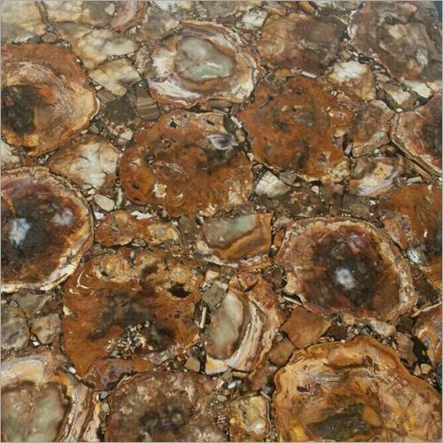Wood Petrified Stone