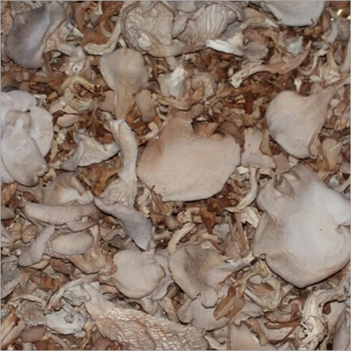 Fresh Dry Mushroom