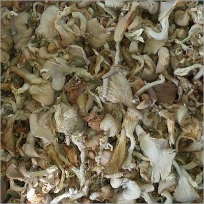 Natural Dry Mushroom