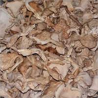 Natural Mushroom