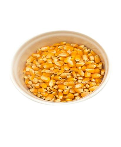 Corn / Solam / Maize