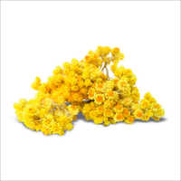 Helichrysum OilHelichrysum oil