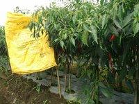 Dap Fertilizer | NPK Fertilizer | Urea Fertilizers and agrodyke multipurpose organic fertilizer