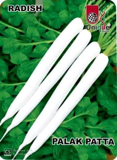Organic Radish Seeds