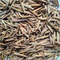 Indrajav Seeds