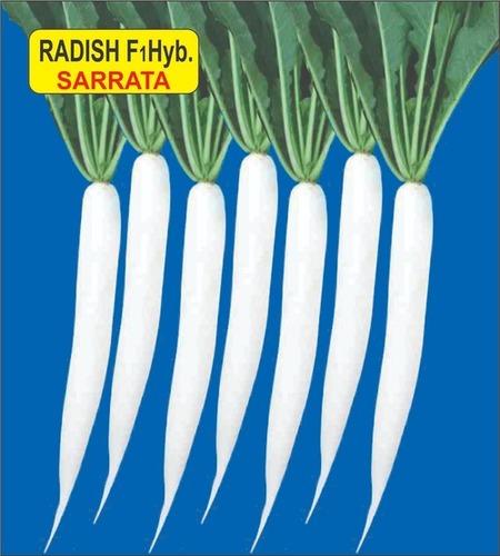 Radish F1 Hyb Sarrata