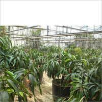 Plants Polyhouses