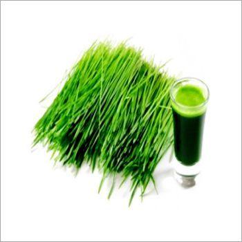 Pure Wheatgrass Extract