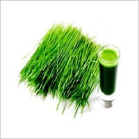 Pure Wheatgrass Extract