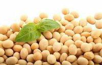 Soybean Isoflavone Extract