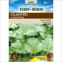 Growing Cilantro Seeds