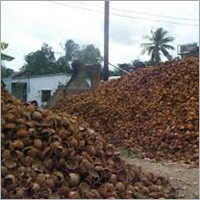 Dry Coconut Shell