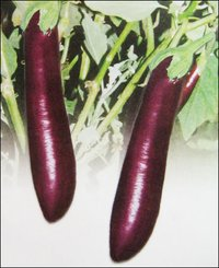Egg Plant Seed