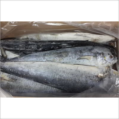 Frozen Mahi Fish Whole