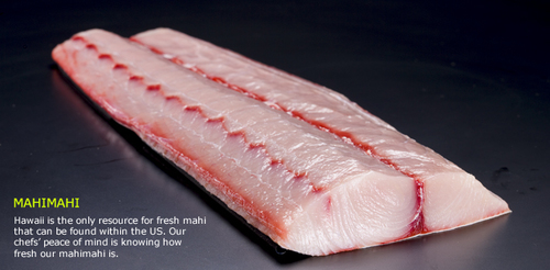 Frozen Mahi Mahi Fish Fillet
