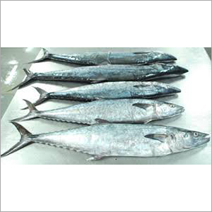 Frozen King Fish Surmai Whole