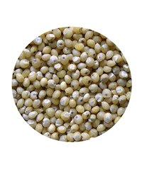 Pearl Millet / Kaattu Kambu