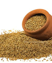 Foxtail Millet / Thinai