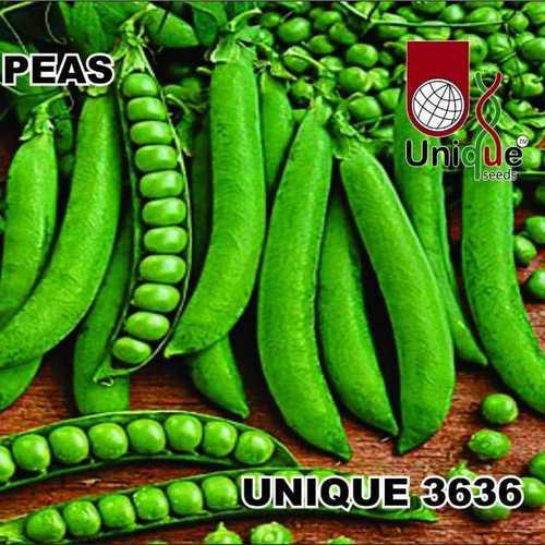 Unique 3636