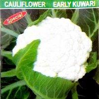 Early Kunwari Spl
