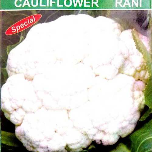 Cauliflower Rani Spl