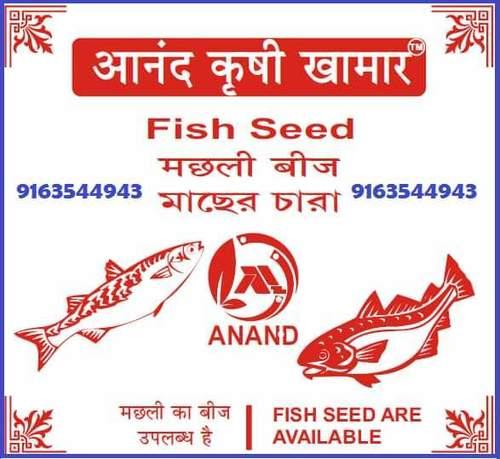 Fish Seed
