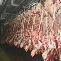 Frozen Meat
