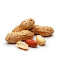 Ground Nut / Peanut