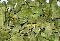 Dry Neem Leaf