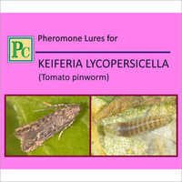Pheromone Lures For Keiferia Lycopersicella